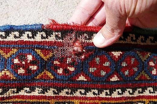 Lavaggio tappeto anti tarme Milano